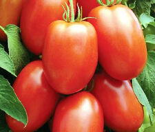 Tomato Roma #1 Paste Tomato Sweet & Delicious 50 Fresh Seeds Free Ship!