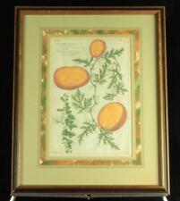 Antique c1890 Framed Chromolith Litho Print Watermelon/Fruit/Botanical Specimen