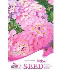 FD1628 Rocket Candytuft Flower Seed Iberis Amara Hot  ~1 Pack 50 Seeds~♫