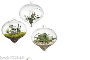 3 Glass hanging globe terrarium for air plant moss wedding gift candle decor