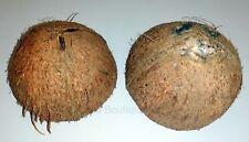4 x Raw Natural Coconut Shell Halved Aquarium Reptile Den Bowl Bird feeder DIY