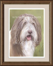 BEARDED COLLIE (Brown) head portrait fine art print by Lynn Paterson