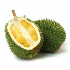 5Pcs Durian Fruit Seeds Rare 2 Kind Bonsai Plant High-nutrition Giant Garden