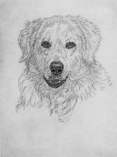Geoffrey Lasko - Kuvasz Dog - Original Etching -S&N - Free Ship