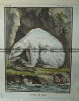 Antique Print 232-520 Polar Bear by Buffon c.1780 Natural History