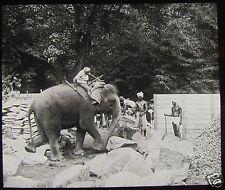 Glass Magic Lantern Slide ELEPHANT WORKING IN STONE QUARRY CEYLON C1910 SRILANKA