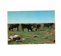 AK Ansichtskarte Rinderherde in der Camargue