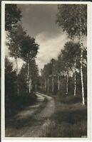 Ansichtskarte Mitwitz/Frankenwald - Birkenweg bei Mitwitz - seltene Aufnahme s/w