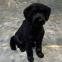 Realistic Black Labrador Dog Puppy Pet Plush Simulation Doll Animal Toy S9N8