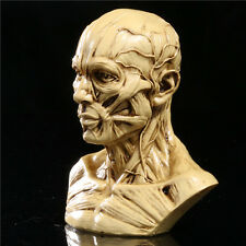 "New 4"" 10cm Human Anatomical Anatomy Skull Head Muscle Bone Medical Model"
