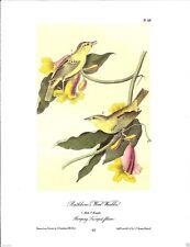 Rathbone's Wood-Warbler Vintage Bird Print by John James Audubon