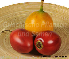 Baum-Tomate gelb und rot 6 Semillas PERENNE Tamarillo Tomaten