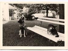 Jardin chien chat sur le banc Citroën Ami 6 8 ? - photo ancienne an. 1960
