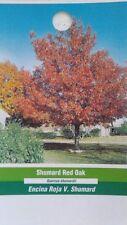 Shumard Red Oak Tree Live Home Landscape Plants Garden Hard Wood Shade Trees