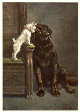 NEWFOUNDLAND BRUSSELS BELGIAN GRIFFON BRUXELLOIS DOG ART ENGRAVING PRINT