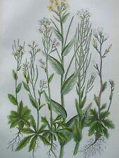 ANTIQUE PRINT DATED C1860 WALL ALPINE BRISTOL TOWER CRESS ANNE PRATT FLOWERS ART