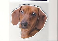 Dachshund 5 inch face magnet for anything metal