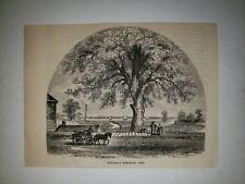 Pontiac Michigan Memorial Tree 1861 Hw Sketch Print Rare!
