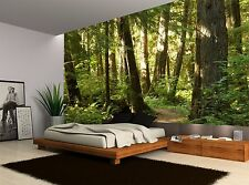 Forest Trees Plants Nature Wall Mural Photo Wallpaper GIANT WALL DECOR