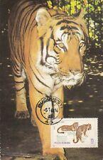 carte postale    animaux    tigre