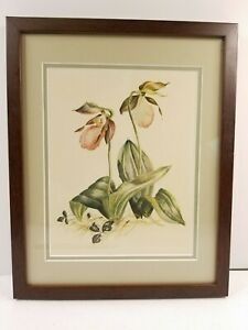 Vintage Framed Hand Colored Lithograph Botanical Print Lady Slipper wild Orchid