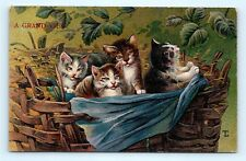 Postcard Kittens In Basket A Grand View 1909 A/S Tl J11