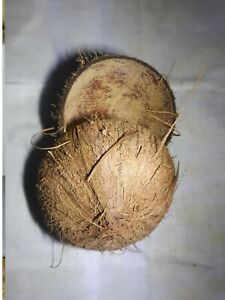A 2 of coconut shells