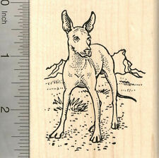 Xolo Dog Rubber Stamp, Mexican Hairless, Xoloitzcuintli K21511 Wm