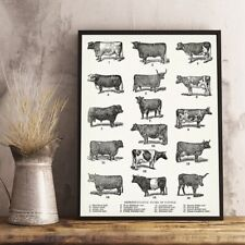 Breeds of Cow Vintage Poster Cattle Types Print Farmhouse Decor Canvas Painting