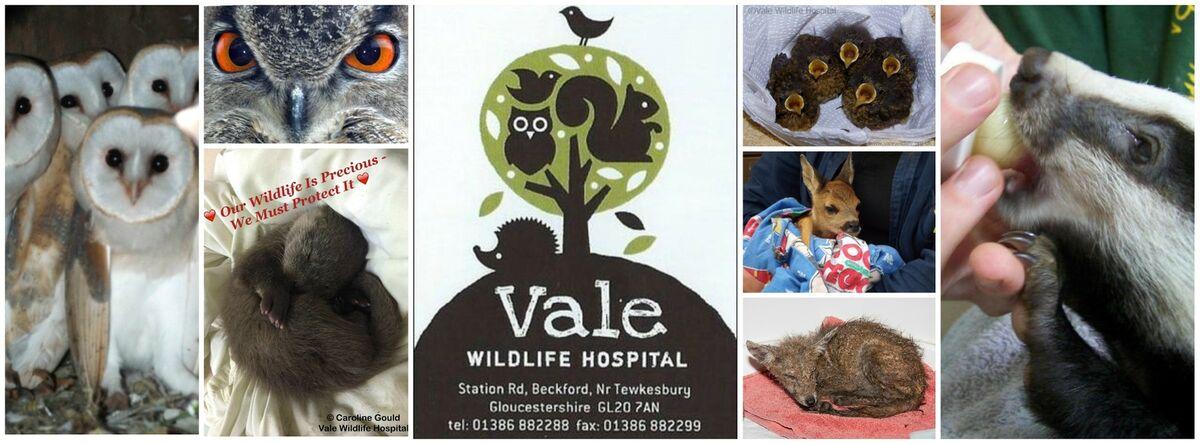 Vale Wildlife Hospital