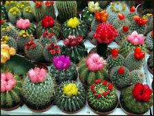"Cactus Seeds ""Mix Species"" Bonsai Plants Organic For Home Garden Flower Decor"