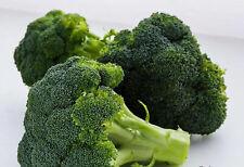 200+ Broccoli Seeds Waltham 29 Broccoli Non GMO Fresh Garden Vegetable USA