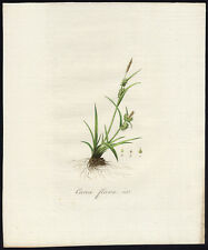 Antique Print-CAREX FLAVA-YELLOW SEDGE-435-Flora Batava-Sepp-1800