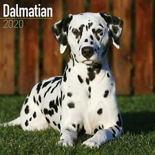 Dalmatian 2020 Official Square Wall Calendar