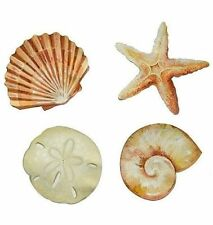 WALLIES SEASHELLS 50 Prepasted wall stickers stickups Shell Starfish Beach ocean