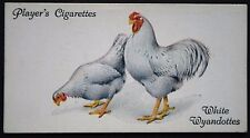 White Wyandotte  Chickens     Poultry   Original  1930's Vintage Colour Card