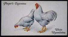 White Wyandotte  Chickens     Superb Original  Vintage Card # VGC