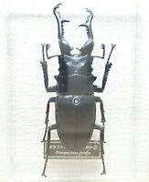 DeAgostini 1:1 Scale PROSOPOCOILUS GIRAFFA Giraffe Stag Beetle replica figure
