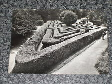 HAMPTON COURT PALACE  THE MAZE MIDDLESEX PHOTO POSTCARD VINTAGE RP UNPOSTED  VGC