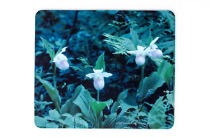 Pink Showy Ladyslipper Orchids Mousepad, Hand Imprinted Photograph