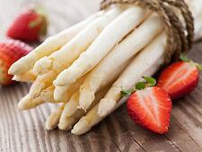 Rare vegetable seeds White Asparagus Survival Organic Heirloom NON-GMO