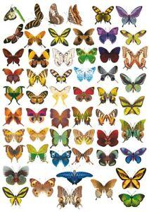 x55 Butterfly stickers Vinyl Waterproof 4 A5 sheets of different Butterflies