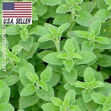 Italian OREGANO - 1,000 Seeds -HEIRLOOM, HEALTHY N TASTY HERB USA_SAME_DAY_SHIP!