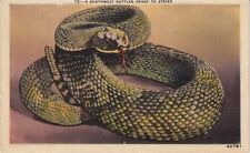 "Linen Post Card Rattlesnake ""A Southwest Rattler Ready to Strike"" Antique"