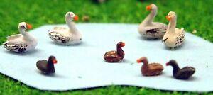 Waterfowl 4 swans 4 ducks Birds A61p PAINTED N Gauge Scale Langley Models 1/148