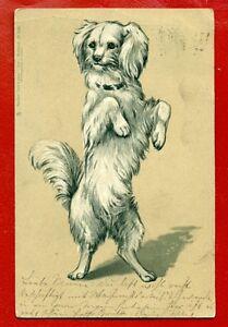 DOG VINTAGE EMBOSSED POSTCARD USED 379