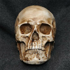 Realistic 1:1 Human Skull Model Anatomical Medical Skeleton Antique Brown