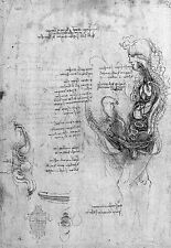 Leonardo Da Vinci Male Genitalia and Reproduction  Anatomy Poster Print Art