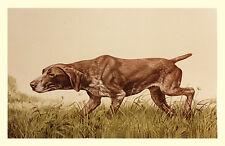 BRAQUE ALLEMAND à poil court GSP travail Gundog chien ESTAMPE - par Sandro