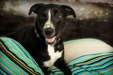Brand New Artisan Handmade Dog Bed Pillow in Beige Stripe Size Medium